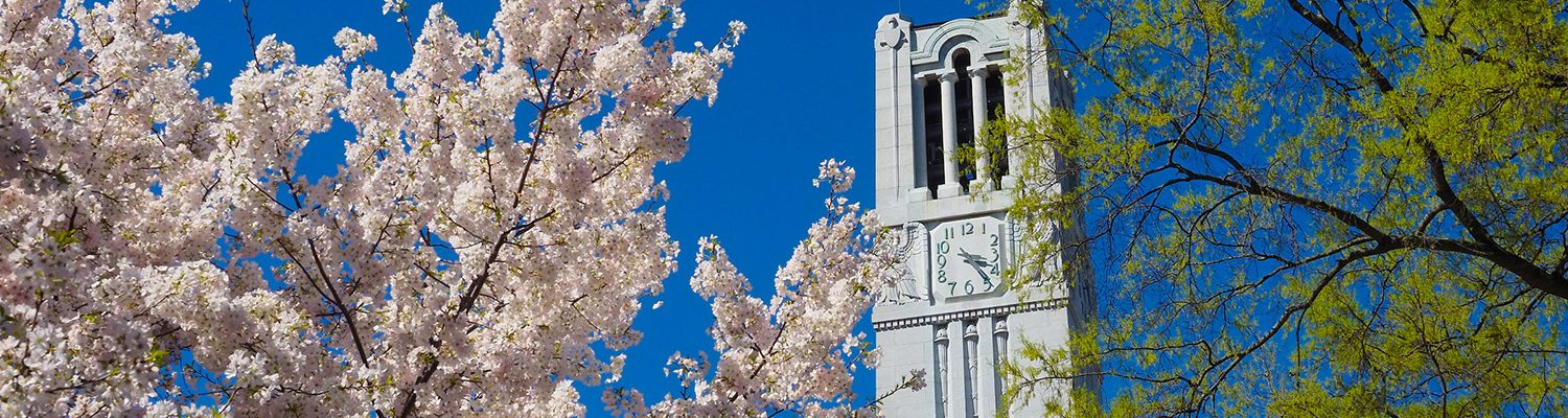 image of NC State belltower behind cherry blossoms and trees